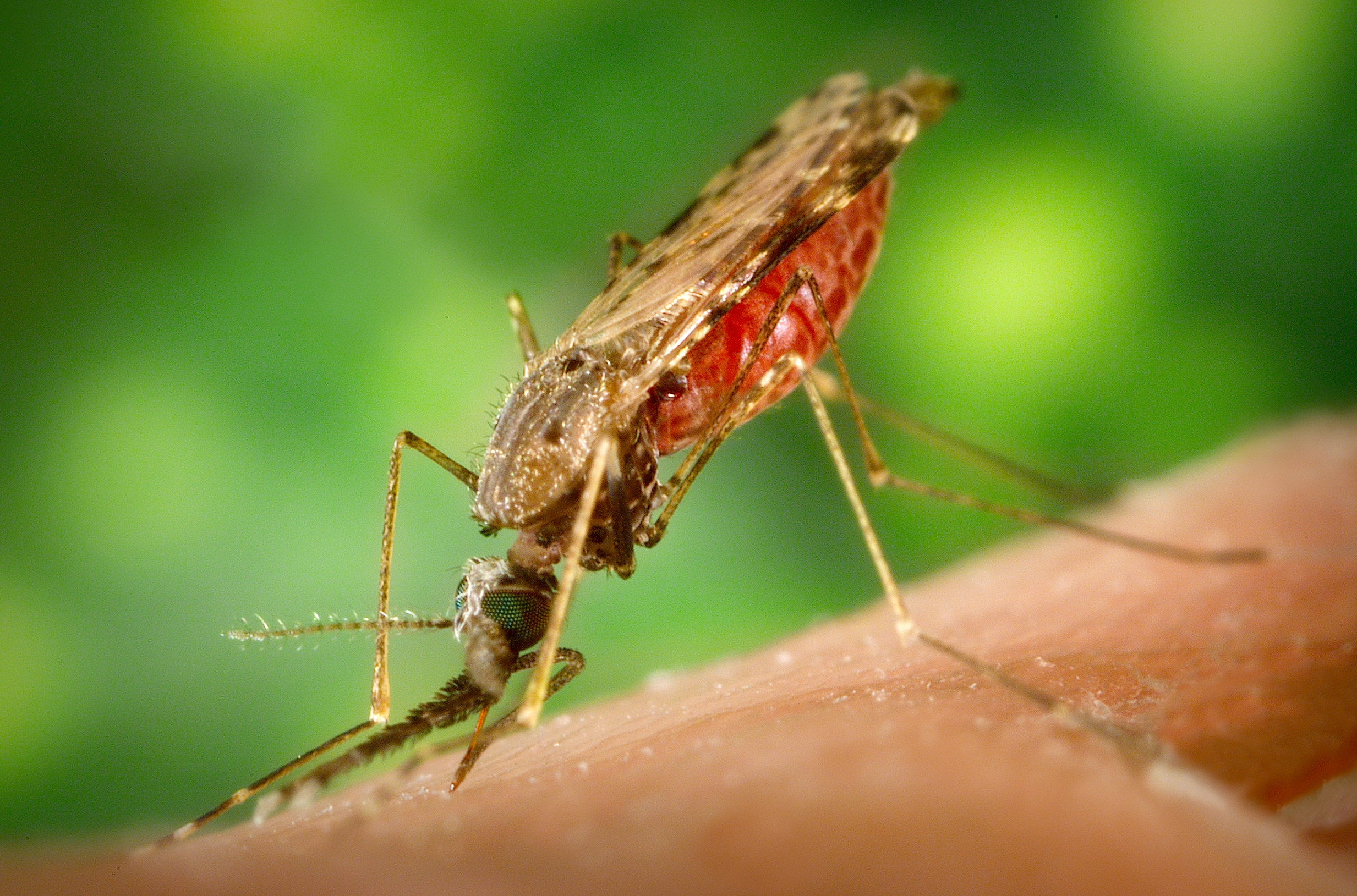 living in well being Malaria