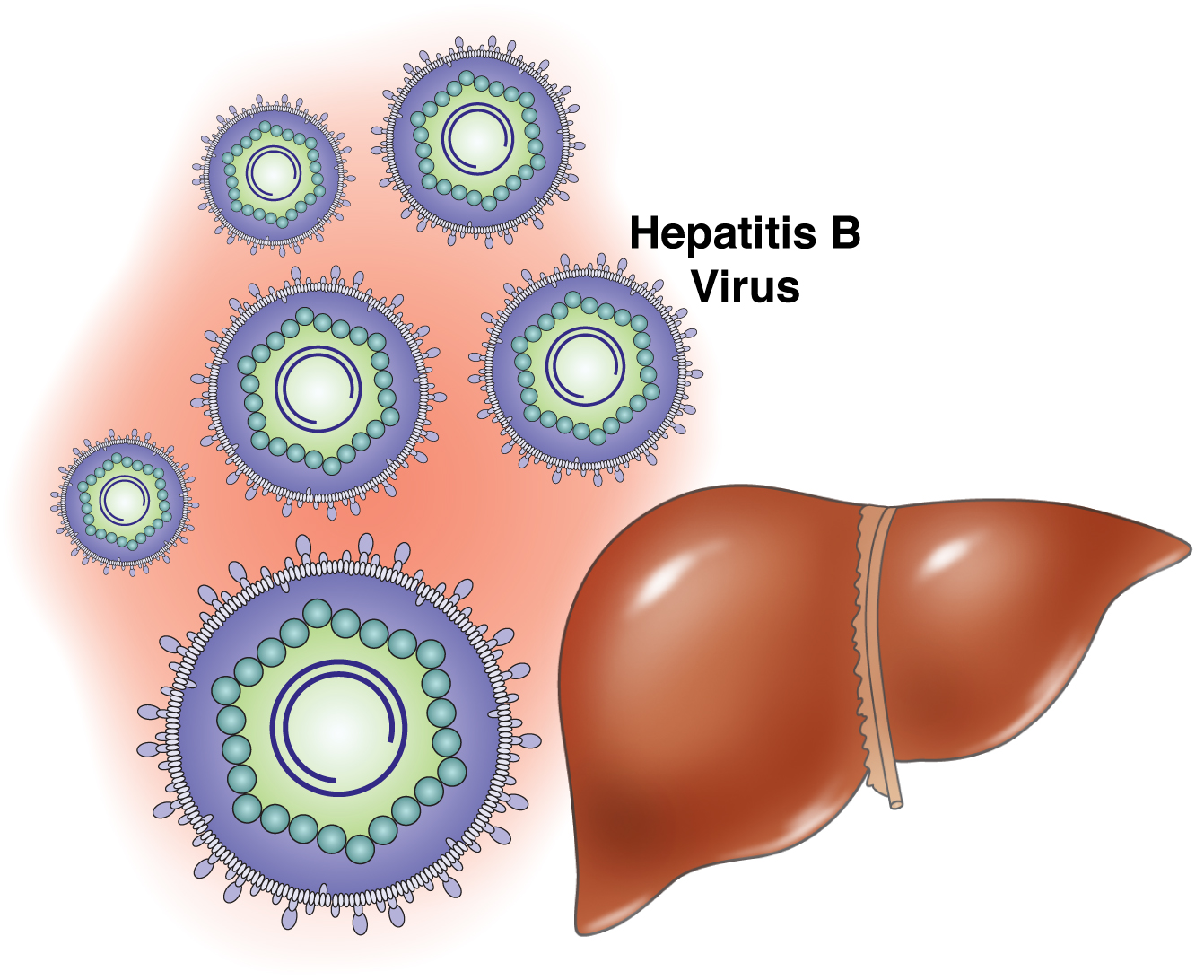 living in well being Viral Hepatitis