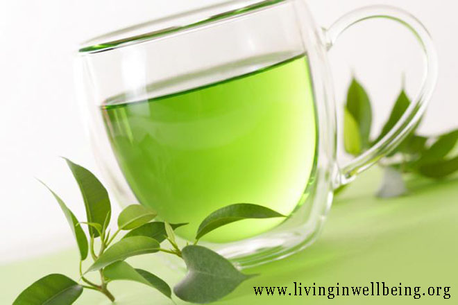 Green Tea Fights Aging and Disease